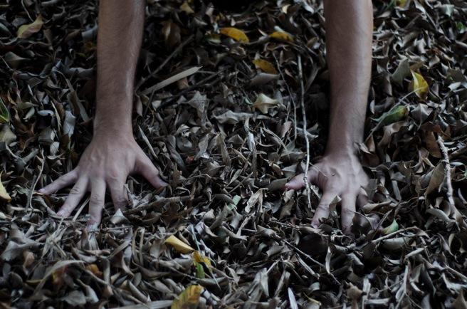 mãos nas folhas